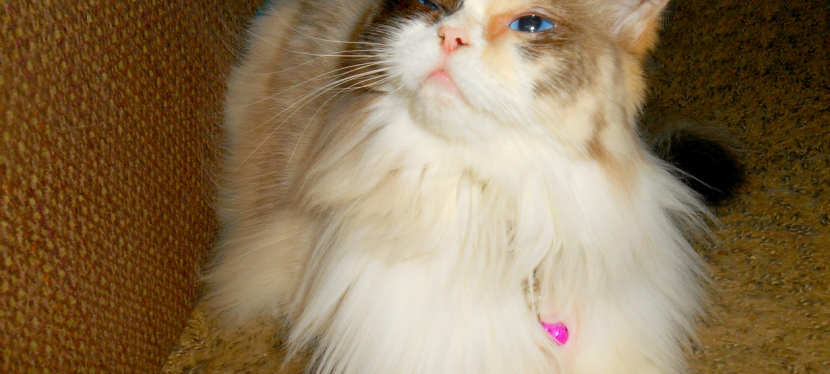 Chatting Cats: Girls Love Jewelry