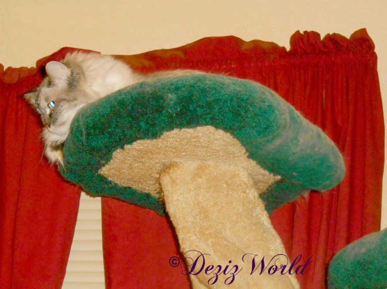 Dezi atop the Liberty cat tree