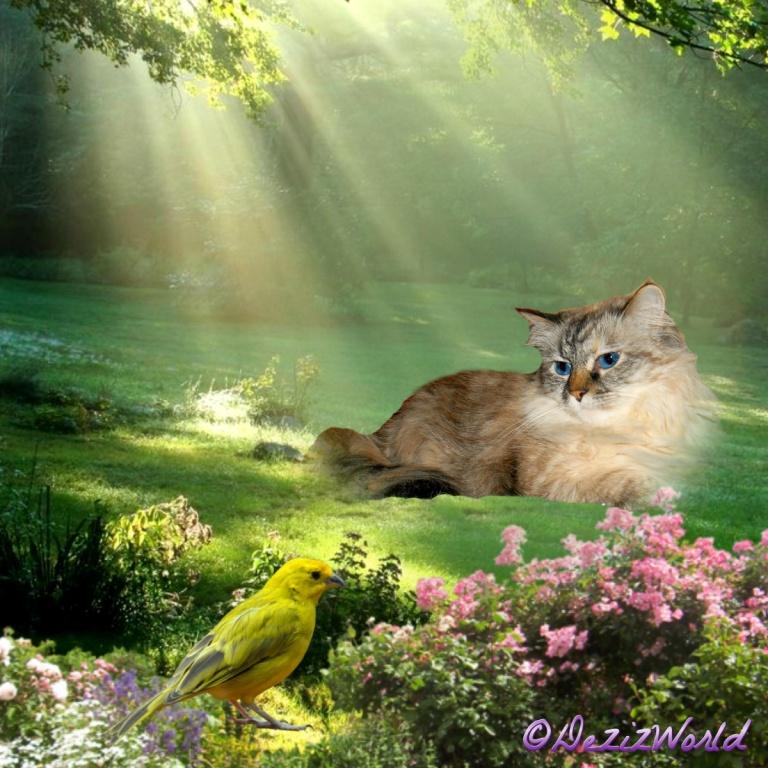 Dezi lays in a sunny meadow