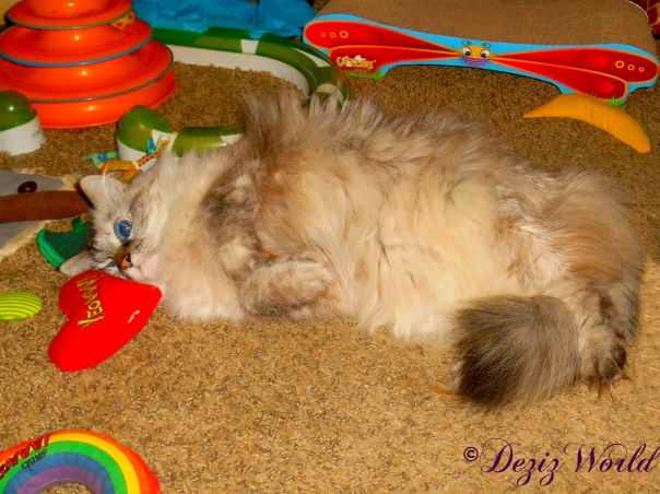 Dezi rolls around on nip toys