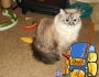 Chatting Cats: Off To Summer Camp Cat ScoutsStyle