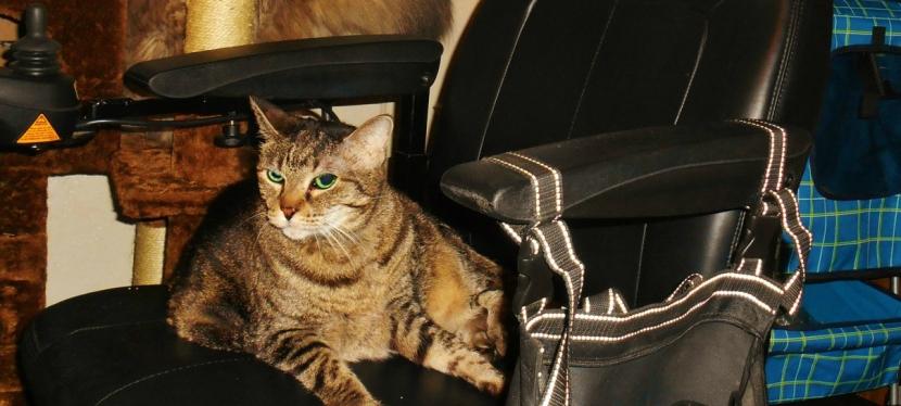 Service Cats: Basic TrainingContinues
