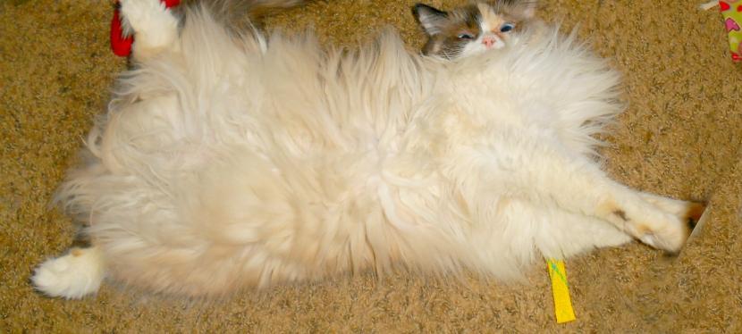 Chatting Cats: Closed Doors & BellyRubs