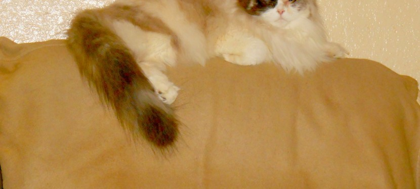 Service Cats: What Is Clicker Training & Operant Conditioning & Do They Work WithCats