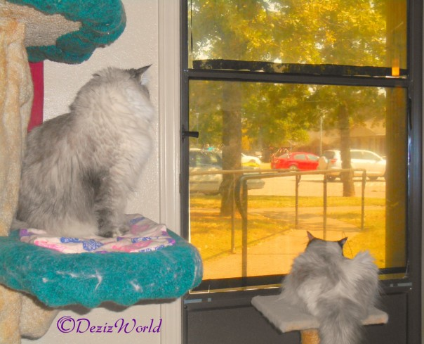 Dezi and Raena look out door from Cat tree and small perch