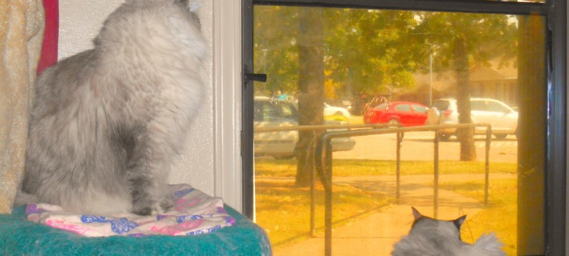 Chatting Cats: Watching Out TheDoor