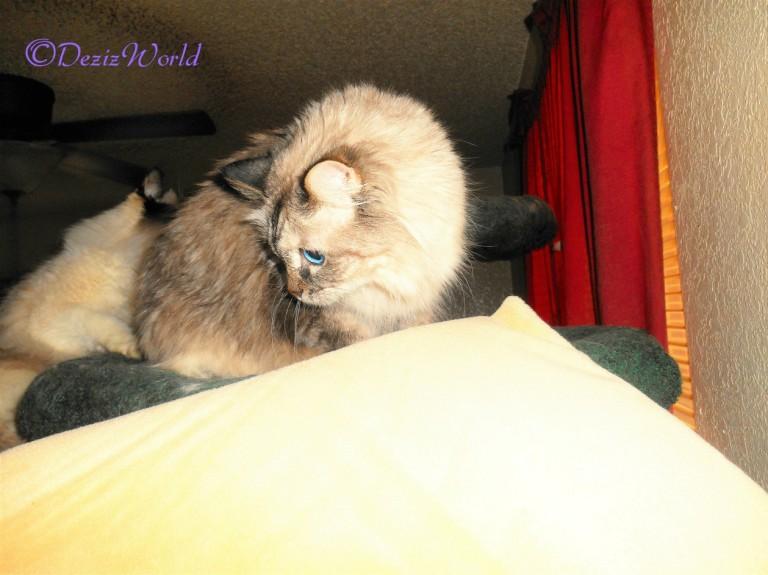 Dezi checks out the Thermal pet mat