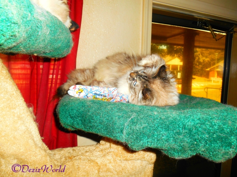 Dezi rolls around on Yeowww toy on cat tree