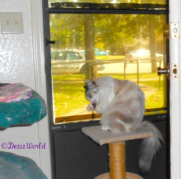 Raena bathes while sitting on the perch in front of door