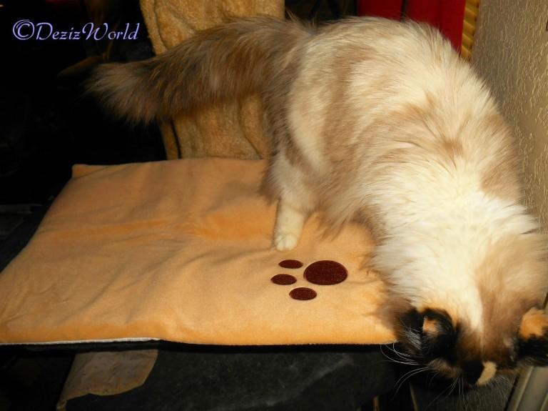 Raena checks out thermal pet mat