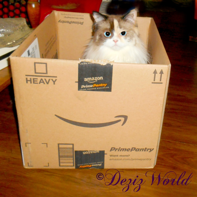 Raena sits in amazon box