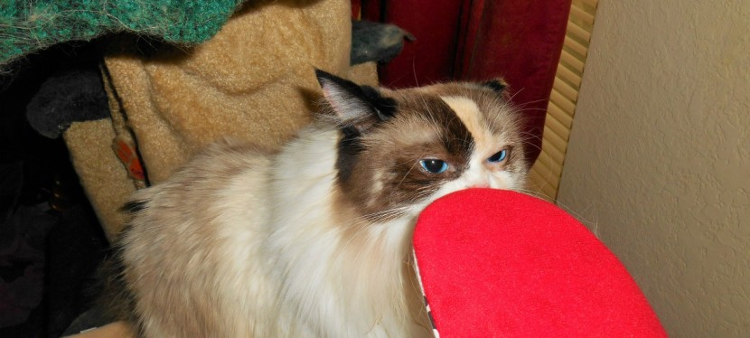 Chatting Cats: Getting Ready For Winter With A Thermal PetMat