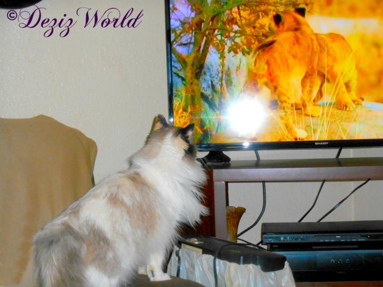 Raena watches tv.