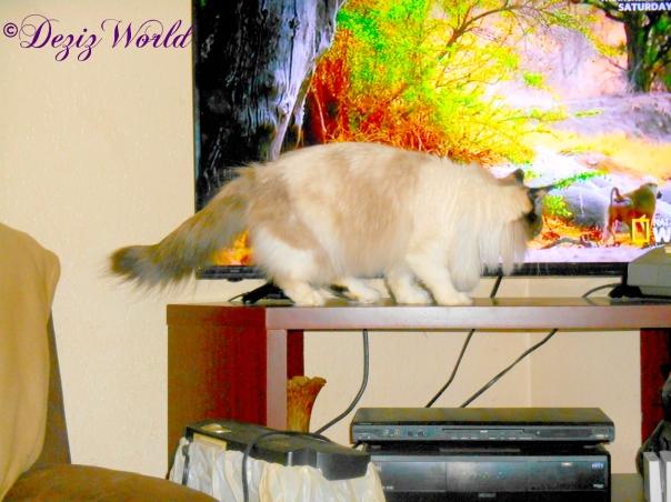 Raena gets close to the TV