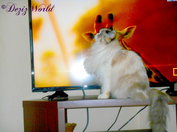 Dezi sits in front of tv with giraffe horn on her head