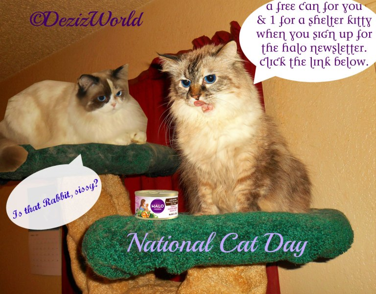 Dezi and Raena on cat tree talking about halo coupon