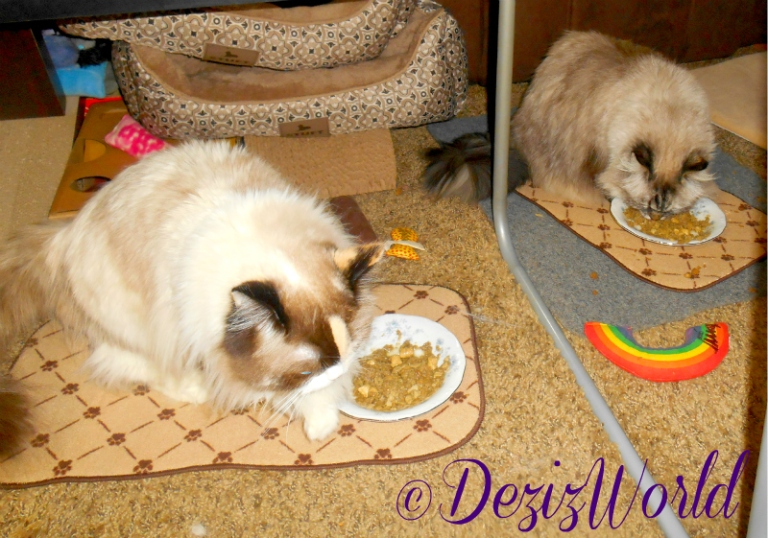 Dezi and Raena eat Primal Freeze dried Cat food