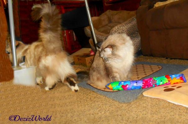 Dezi sits over the Kitty Kick Stix and looks back as Raena walks away