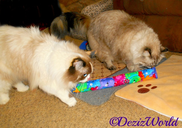 Dezi and Raena check out the Kitty Kick Stix