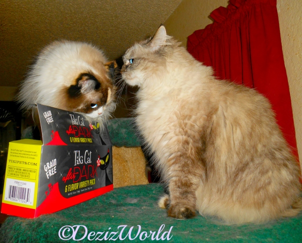 Dezi and Raena get close over the TikiCat box