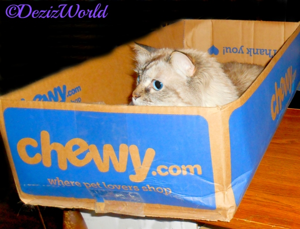 Dezi peeks out from a chewy box