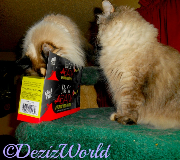 Dezi looks at Raena while she sticks her nose in the TikiCat box