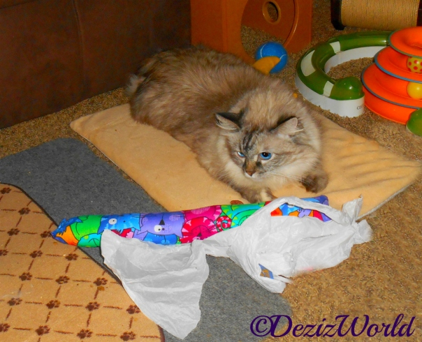 Dezi lays on cat mat and looks at the Kitty Kick Stix half out of the wrapper in front of her