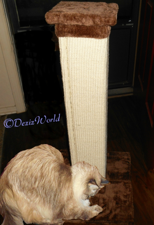 Dezi with Scratching post