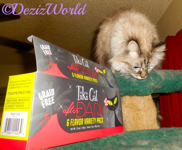 Dezi looks down at the TikiCat box
