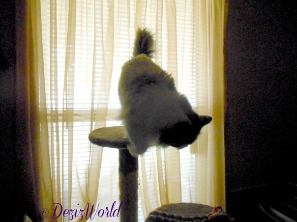 Raena jumps down from the brown tree in front of the new old window
