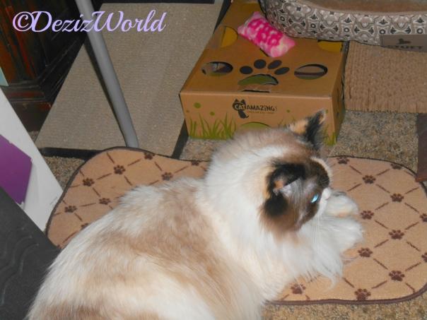 Raena lays on her food mat