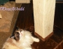Chatting Cats: A Scratching Post To Meet Your Cat's Need to Scratch #ChewyInfluencer