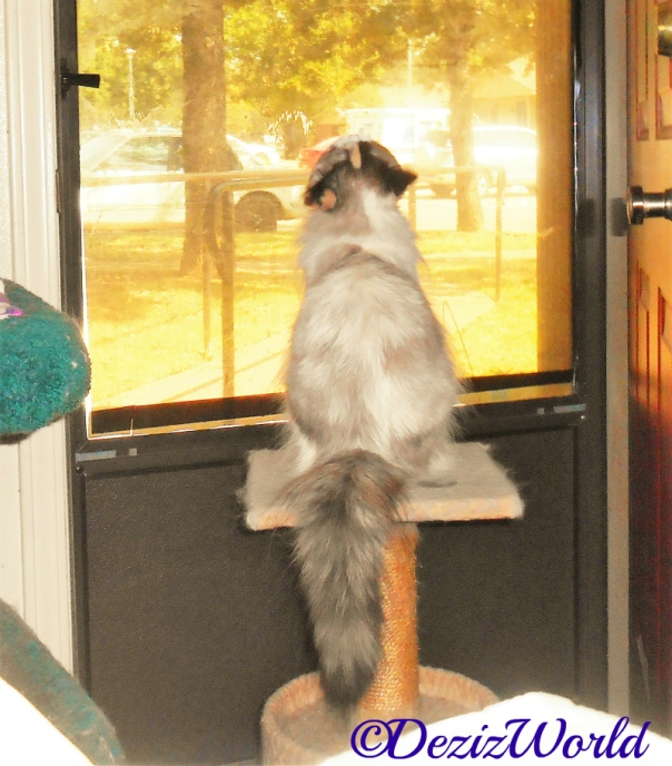 Raena sits on perch and looks out door