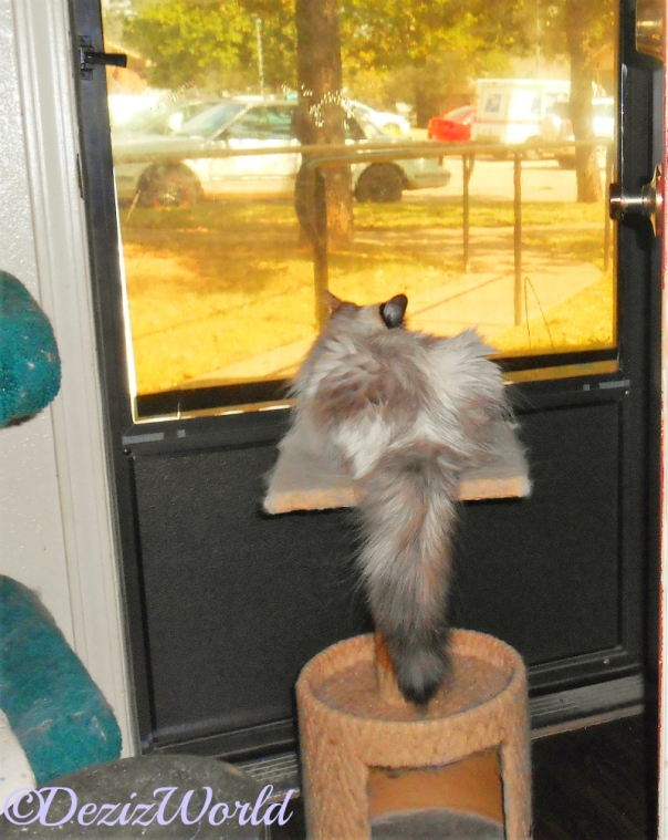 Raena lays on perch and looks out door