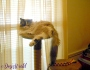 Chatting Cats: DecorationsEverywhere