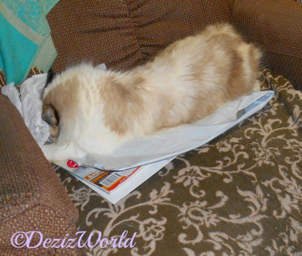 Raena rolls in the Kitty Kick Stix wrapper