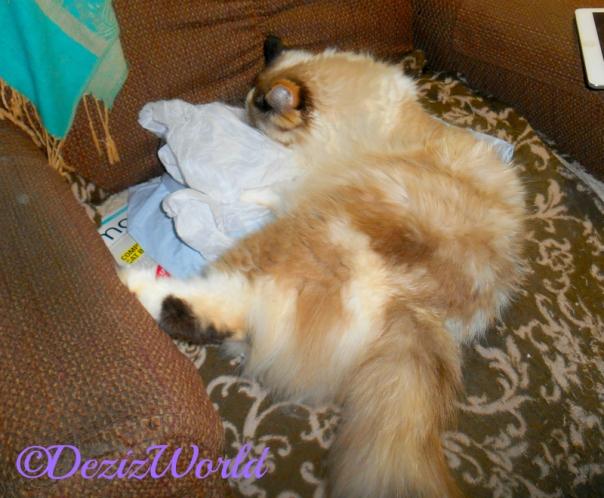 Raena plays with Kitty Kick Stix wrapper