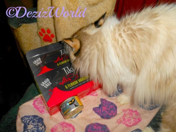 Raena sniffs the box of TikiCat After Dark cat food.