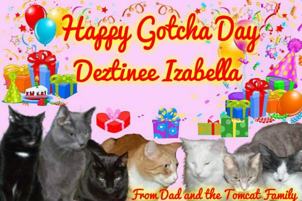 Happy Gotchaday Dezi from Timmy Tomcat and family