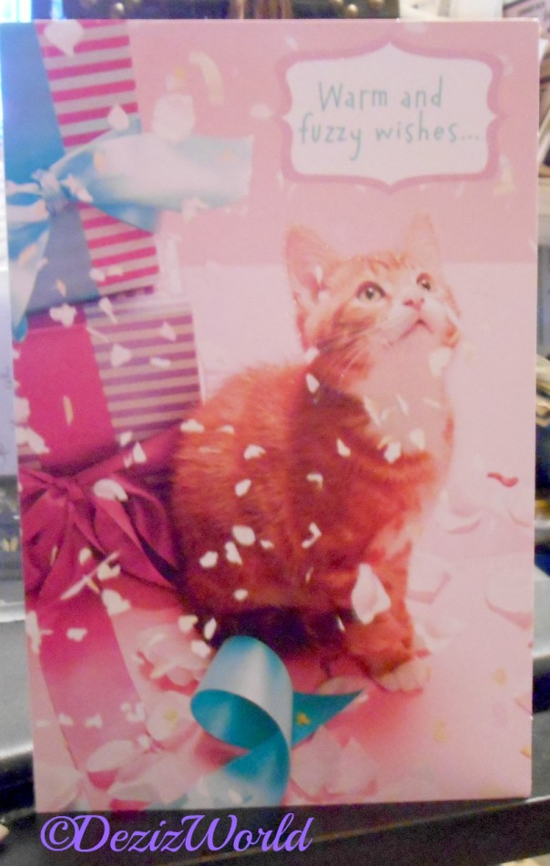 Cute kitty birthday card from Andy and family