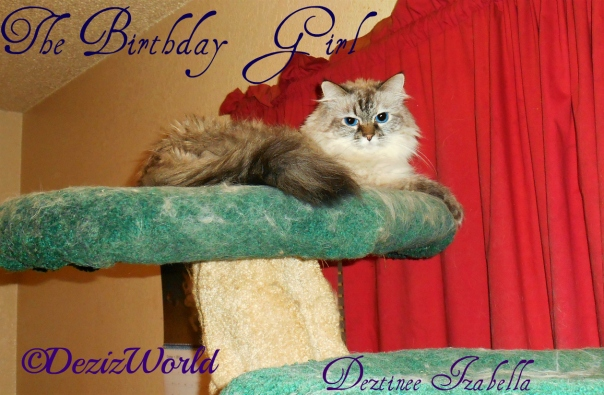 Dezi the Birthday girl lays atop the Liberty Cat Tree