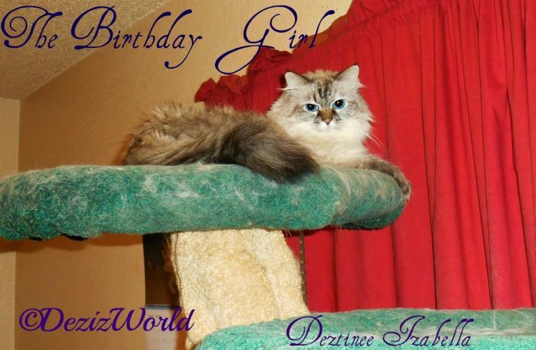 Dezi the Birthday girl lays atop the Liberty Cat Tree