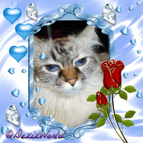 Dezi in a blue frame with blue hearts diamonds and roses