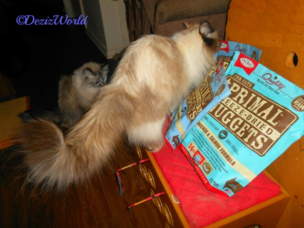Raena sniffs the Primal Freeze dried Rabbit food while Dezi looks on, sent by Vonda