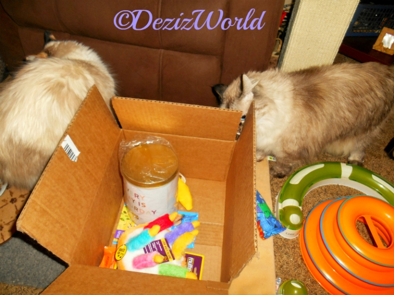Dezi and Raena check out the Chewy Goody Box