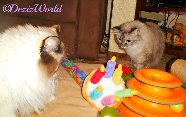 Dezi and Raena look at the birthday cake that 's playing happy birthday
