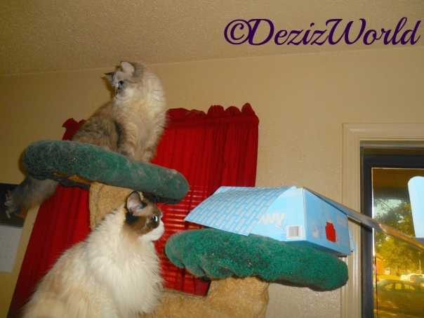 Dezi and Raena checking out the Chewy Goody box
