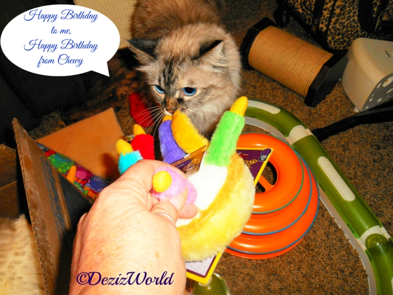Dezi sniffs the birthday cake toy from the chewy birthday box