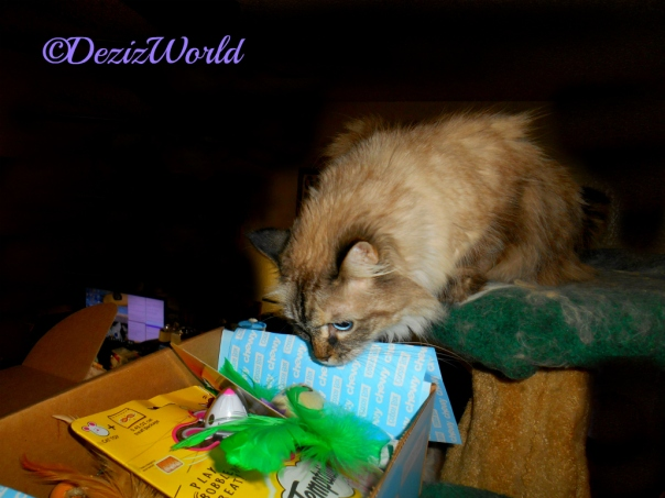 Dezi checks out the Chewy Goody Box