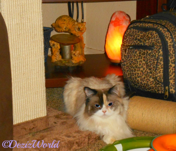 Raena lays beside scratcher